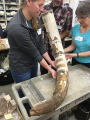 Partial reassembly of tusk.