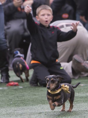 People bring their dogs to compete in the Oshkosh Oktoberfest Running of the Wiener Dogs at Oktoberfest 2015.