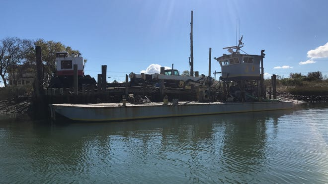 Oyster Farms Found To Help Chesapeake Bay Health But How Much