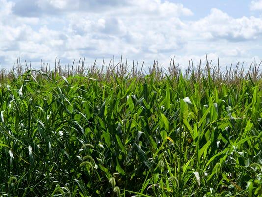 crops2