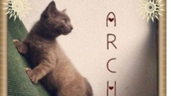 Arch is playful and looking for a family of his own.