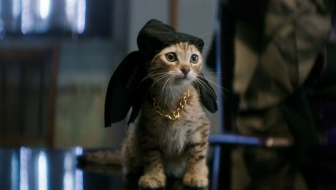 Seven tabby kittens were used to play the title character of 'Keanu.'