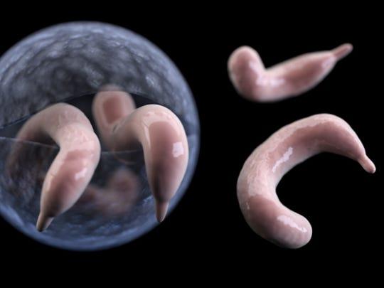Cryptosporidium is a microscopic parasite that causes