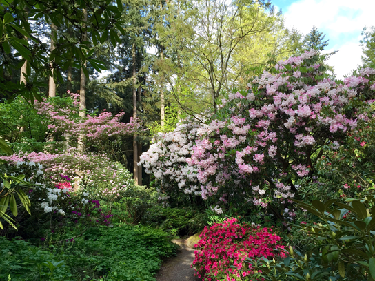 Visitors can check out The Cecil and Molly Smith Garden April 7 through May.