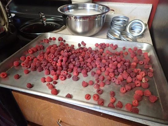 -jenness spreads berries on a tray before freezing so she doesn't end up wit.jpg