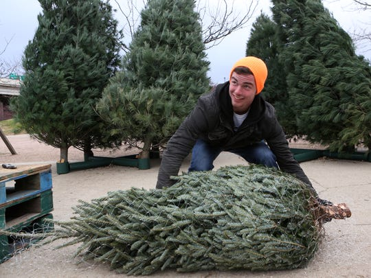 Grant Foster loads up a Christmas tree for customers at the Christmas tree lot  where he works near the riverfront in downtown Louisville. Dec. 16, 2014.