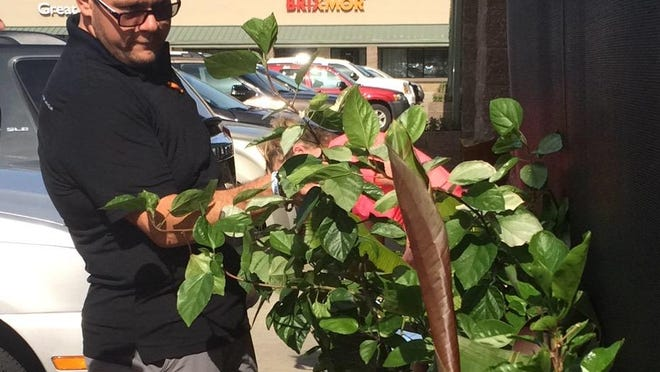 Zach Peterlin checks out some of the potted plants that were returned to his restaurant on Thursday.