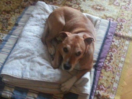 AP-MED-Ebola-Dogs.JPG