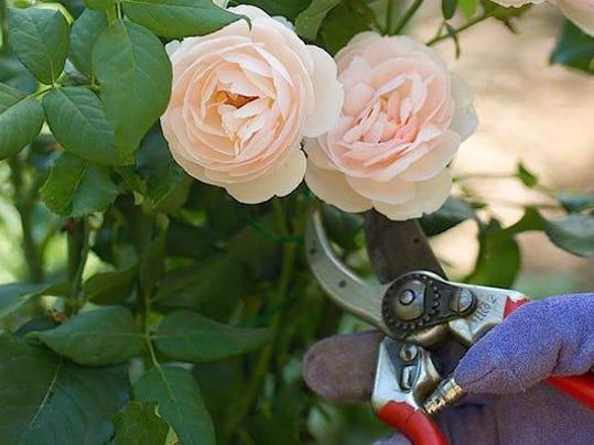 vtd 0116 Master Gardener2
