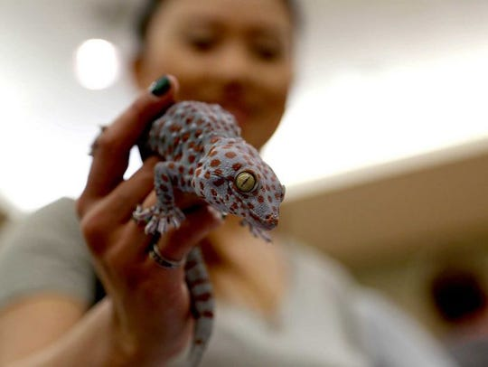 The HERPS Corpus Christi Exotic Reptile and Pet Expo