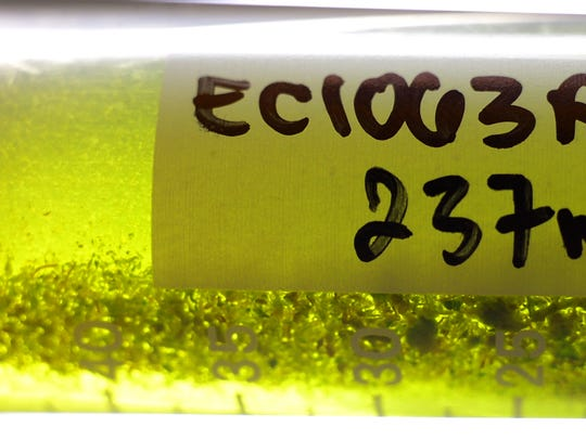 Marijuana flower dissolved in a solvent awaits filtering