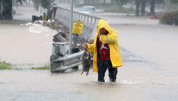 A man rescues an armadillo from flood waters in Houston