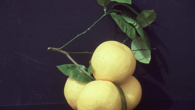 Mini grapefruits