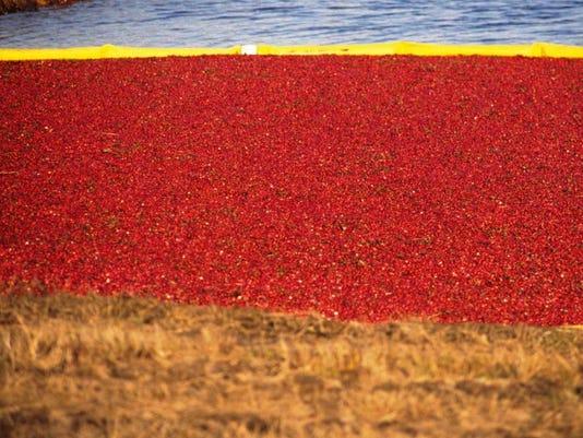 Cranberry-Bobg.JPG