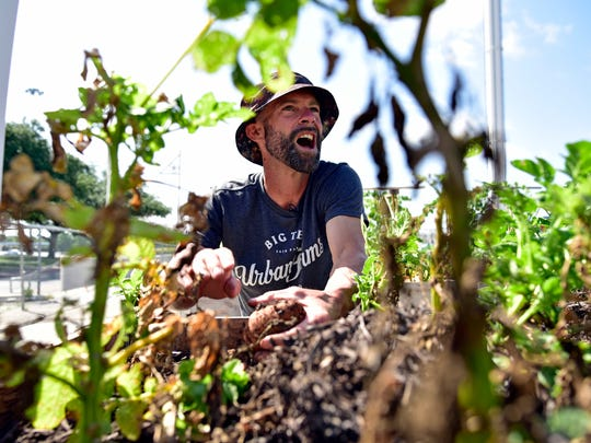 In this June 16, 2017 photo, Drew Demler, greenhouse manager of Big Tex Urban Farms, picks Kennebec potatoes for donation at the farm inside Fair Park in Dallas.