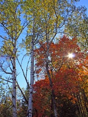 Fall colors blanket the trees along the North Country Trail in Ashland County.