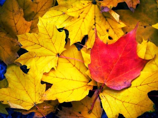 635760117756700246-Leaves2