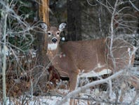 Archers getting an extra month to hunt deer in metro Detroit