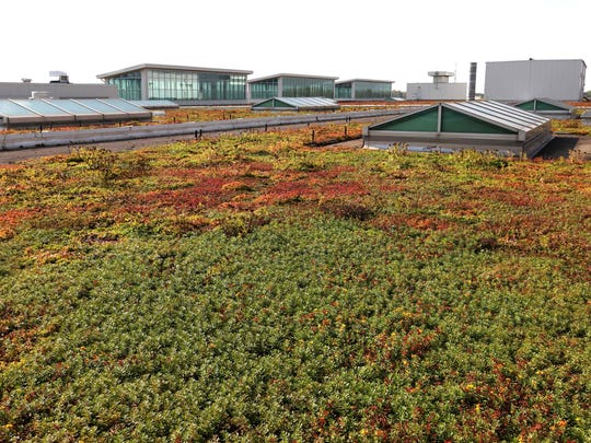 Sedum plants on the roof at the Dearborn Truck Assembly Plant in October 2013. 2013 marked the 10th anniversary of the industrial 10.4 acre living roof which is about the equivalent of 10 football fields.