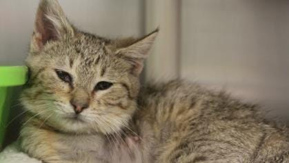 Lee, Furry Friend of the Week, is available for adoption at the Licking County Humane Society.
