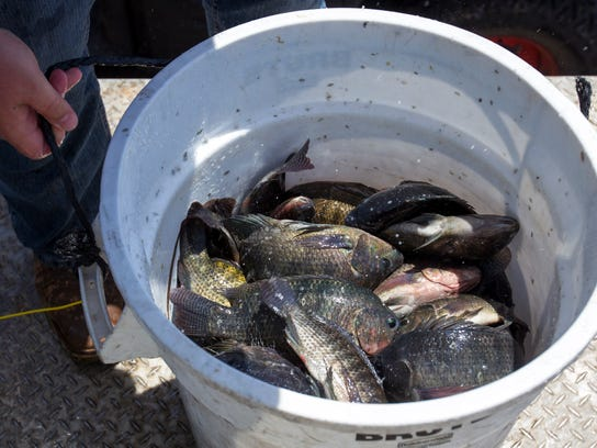 Fish in west valley lakes provide more than a big catch for Fish stocking near me