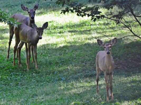 636136940258649254-Deer3.jpg