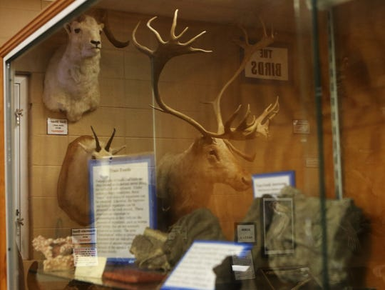 Taxidermied animals are reflected in a glass window