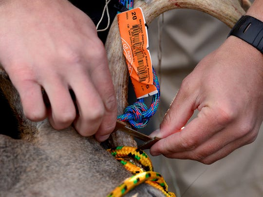 Chris Dohrmann of the DNR measures the antlers of a deer Oct. 2 at a deer check station off Jolly Road in Lansing.