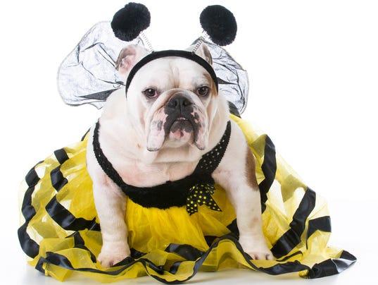 dog dressed like a bee