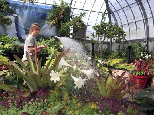 Bethany Butler waters the flowers and plants  at Krohn Conservatory.