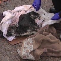 Puppy found wrapped in plastic on Detroit sidewalk