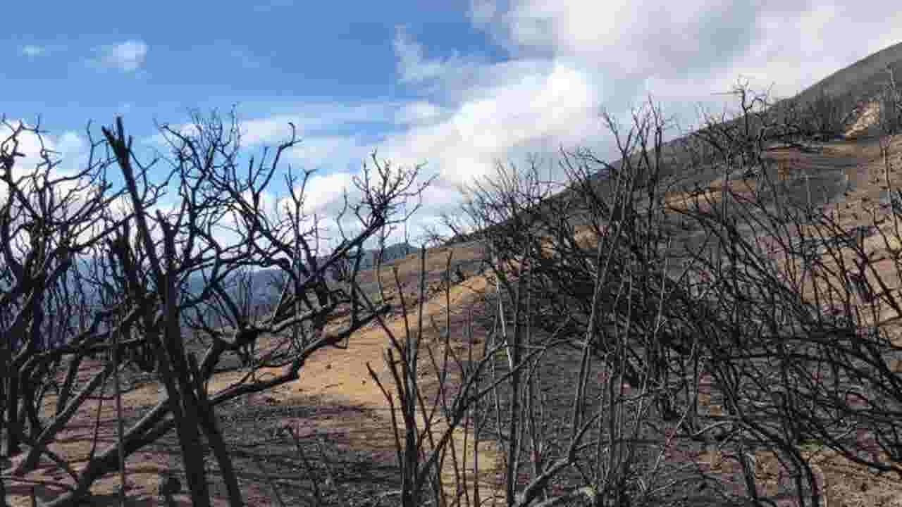 Above Ojai, Thomas Fire burned Los Padres National Forest land