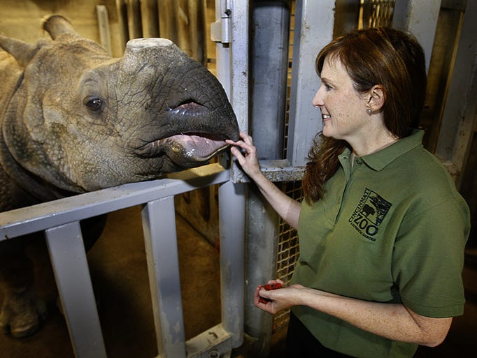 Monica Stoops, reproductive physiologist for CREW at the Cincinnati Zoo & Botanical Garden, feeds Nikki in 2011. The rhino, who was born in 1991, passed away Thursday morning.