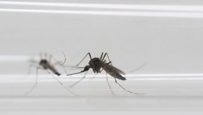 Arizona will seek to quickly identify travelers who return with Zika infections and work to prevent the virus from reaching local mosquitoes that can carry the virus.