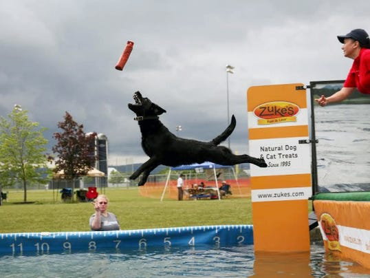 A dog and owner compete in the Dock Dogs Big Air Wave event at the The 9th Annual Furry Fun Days at the Shippensburg Township Park Saturday. The event raises awareness about adoption and raises funds for area animal shelters.