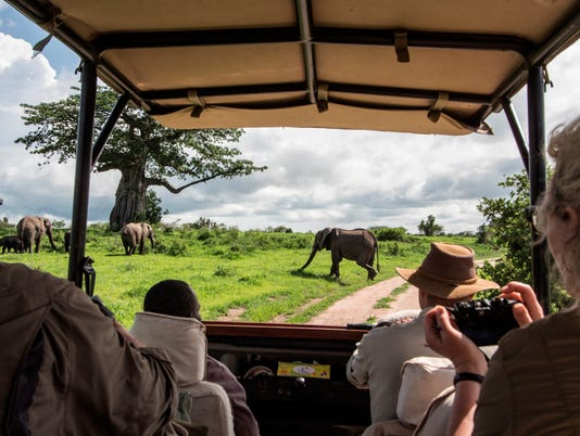 635555498134647023-tanzania-Kwihala-Camp-game-drive-walking-elephant-Tracey-Van-Wijk-HR