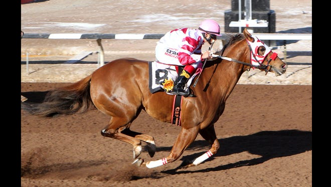 Astica is one of the top quarter horses in the country.