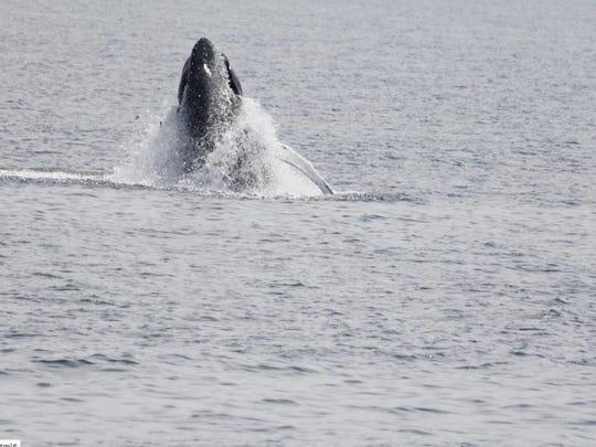 Whale 3.jpg