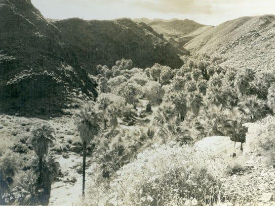 Palm Canyon oasis.