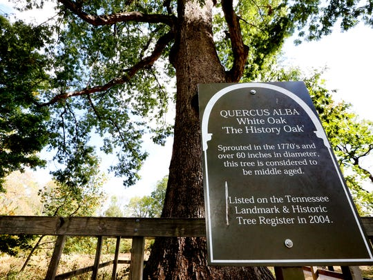 The History Oak located on the grounds of Oaklands