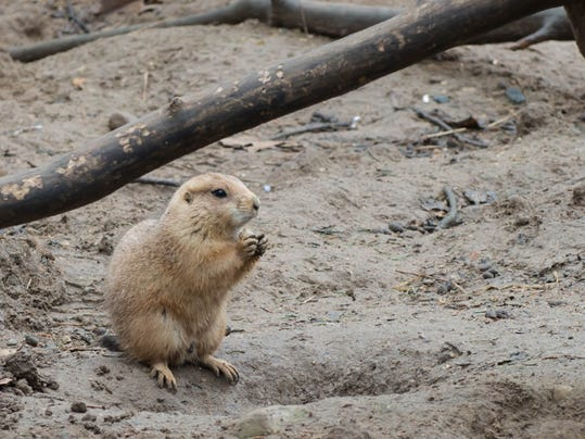 Zoo_07.jpg