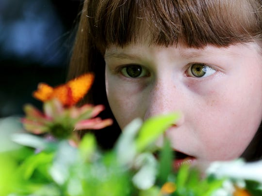 In this July 6, 2017, photo, Rebecca Franklin, 9, takes a close look at one of the butterflies at the Butterfly House at Beaver Creek Reserve in Fall Creek, Wis.
