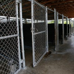 Panel seeks suspension of Ingham County Animal Control leadership