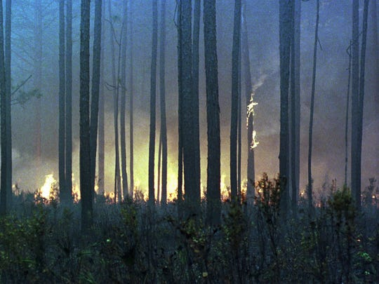 A fire spreads through the Apalachicola National Forest on May 25, 1998. More than 1,000 acres burned in or near the Apalachicola National Forest, a 600,000-acre spread of oak and longleaf pines near Tallahassee.
