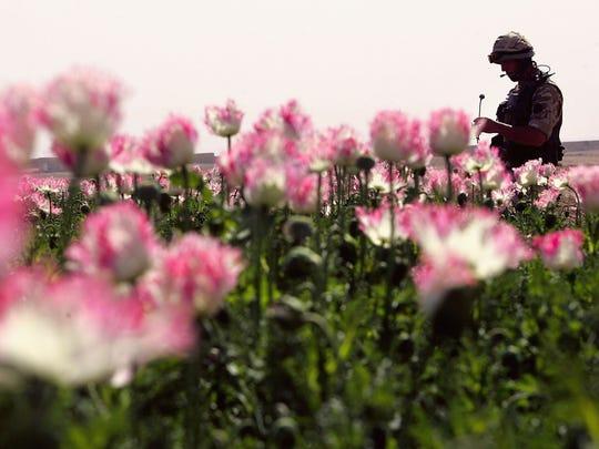 Un soldado camina entre un plantío de opio.