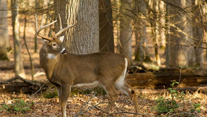 A record number of antlered bucks were harvested during the 2017-2018 deer hunting season in Western North Carolina.