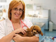 30% Off Veterinary Physical Exam