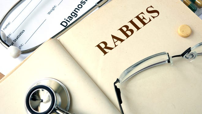 A domestic horse owned in the Nogales area tested positive for rabies, the Arizona Department of Agriculture said.