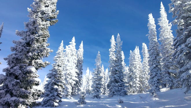 Snow-covered trees create a stunning scene on a clear day at Steamboat Springs Ski Resort. Photo from USA Today