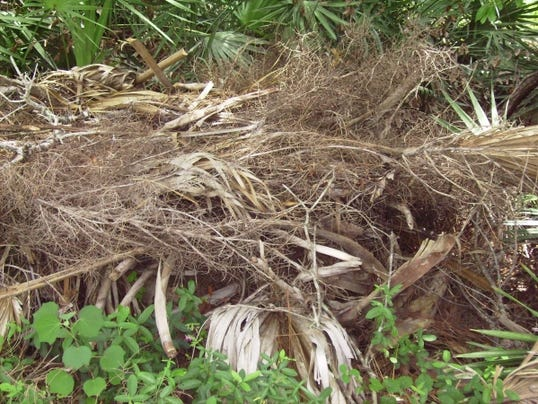 636360580690450638-brush-pile-compost-July-30--yard-doc.jpg